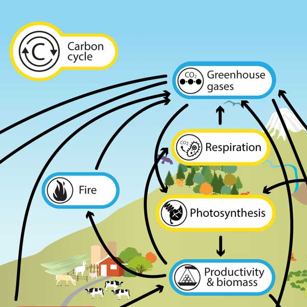 Fuels carbon cycle fossil The Carbon