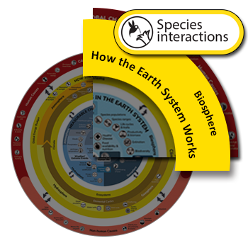 Species Interaction clickable icon