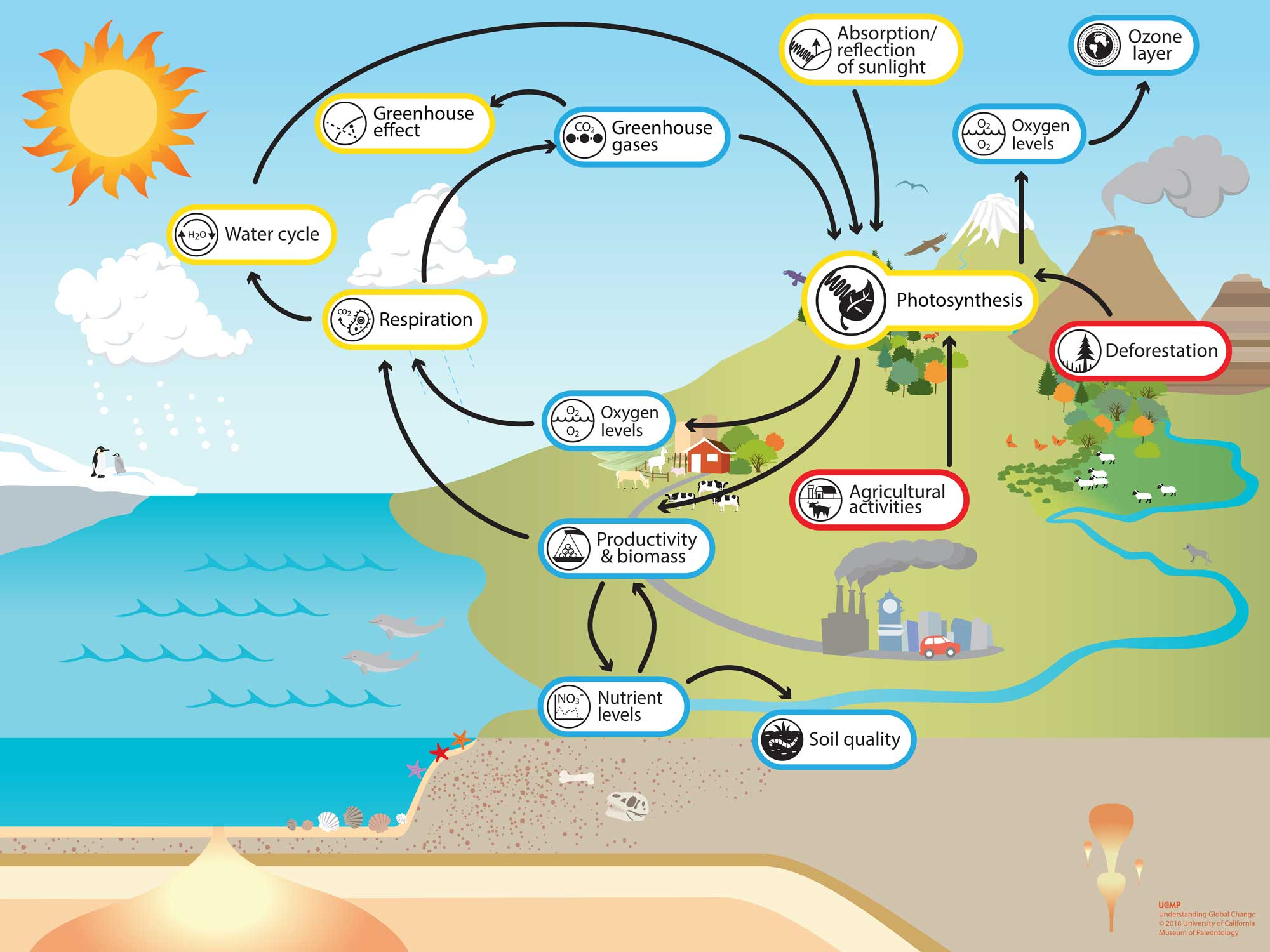 Photosynthesis system model