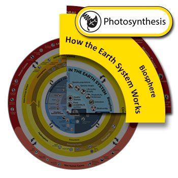 Photosynthesis clickable icon