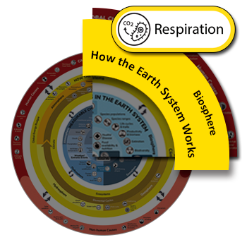 Clickable icon for the respiration process